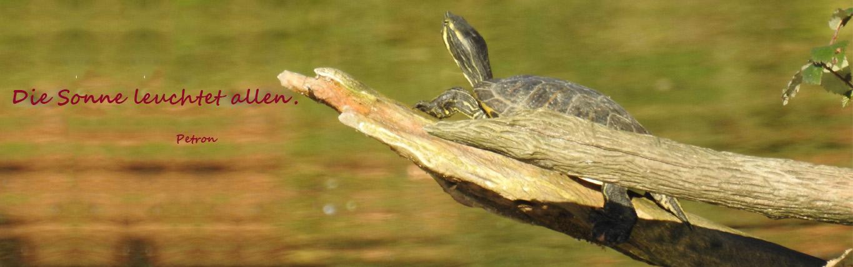 Banner Schildkröte